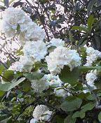 f:id:fujiwarakominka:20090501183800j:image