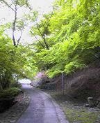 f:id:fujiwarakominka:20090505164700j:image