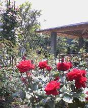 f:id:fujiwarakominka:20090509140600j:image