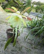 f:id:fujiwarakominka:20090524172400j:image