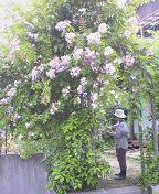 f:id:fujiwarakominka:20090526072900j:image