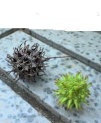 f:id:fujiwarakominka:20090528170100j:image