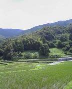 f:id:fujiwarakominka:20090704113600j:image