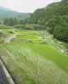 f:id:fujiwarakominka:20090705092200j:image:medium