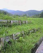 f:id:fujiwarakominka:20090705093200j:image