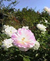 f:id:fujiwarakominka:20091021100200j:image