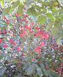 f:id:fujiwarakominka:20091021100900j:image