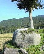 f:id:fujiwarakominka:20091126131000j:image