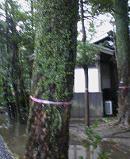 f:id:fujiwarakominka:20100211142900j:image