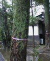 f:id:fujiwarakominka:20100211142900j:image:medium