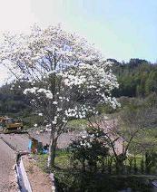 f:id:fujiwarakominka:20100313124700j:image