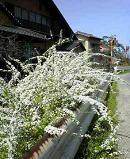 f:id:fujiwarakominka:20100317132600j:image