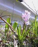 f:id:fujiwarakominka:20100317132800j:image