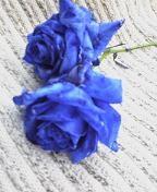 f:id:fujiwarakominka:20100318103500j:image