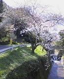 f:id:fujiwarakominka:20100322102600j:image