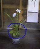 f:id:fujiwarakominka:20100418141300j:image