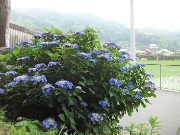 f:id:fujiwarakominka:20100623175442j:image