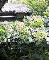 f:id:fujiwarakominka:20100903111800j:image