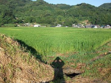f:id:fujiwarakominka:20100904073526j:image