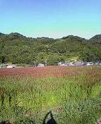 f:id:fujiwarakominka:20100910074100j:image