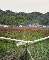 f:id:fujiwarakominka:20100911074300j:image