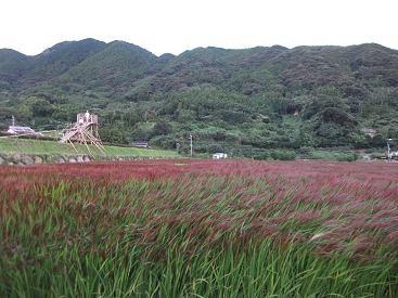 f:id:fujiwarakominka:20100912062832j:image