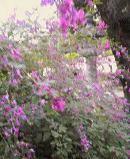 f:id:fujiwarakominka:20100926162100j:image
