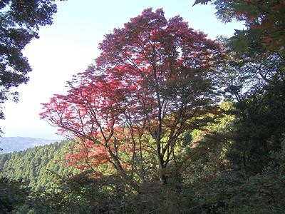 f:id:fujiwarakominka:20101107151435j:image