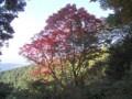 f:id:fujiwarakominka:20101107151435j:image:medium
