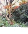 f:id:fujiwarakominka:20101112100400j:image:medium