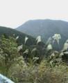 f:id:fujiwarakominka:20101113110100j:image:medium
