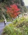 f:id:fujiwarakominka:20101113110800j:image:medium