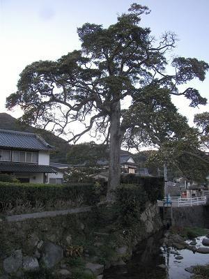 f:id:fujiwarakominka:20110302174834j:image