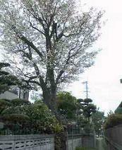 f:id:fujiwarakominka:20110403112000j:image