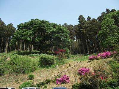 f:id:fujiwarakominka:20110508152723j:image
