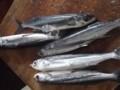 f:id:fujiwarakominka:20110609141040j:image:medium