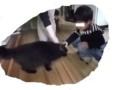 f:id:fujiwarakominka:20110619115047j:image:medium