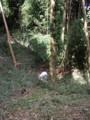 f:id:fujiwarakominka:20110629152002j:image:medium