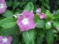 f:id:fujiwarakominka:20110729060933j:image:medium