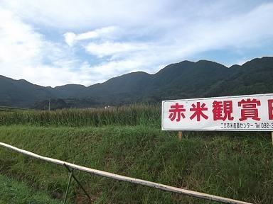 f:id:fujiwarakominka:20110911074738j:image