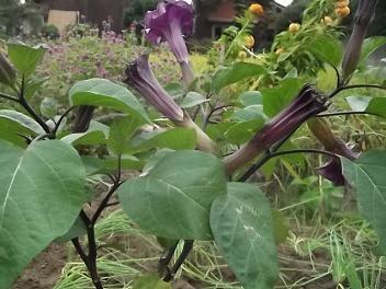 f:id:fujiwarakominka:20110926163350j:image