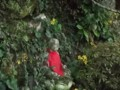 f:id:fujiwarakominka:20111106150806j:image:medium
