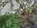 f:id:fujiwarakominka:20111106151130j:image:medium