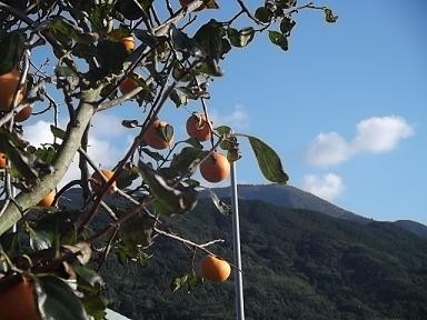 f:id:fujiwarakominka:20111107155035j:image