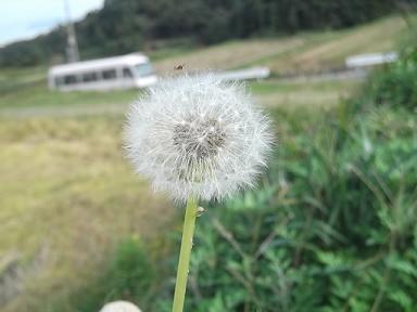 f:id:fujiwarakominka:20111111102635j:image
