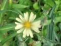 f:id:fujiwarakominka:20111111102818j:image:medium