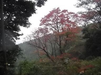 f:id:fujiwarakominka:20111123115341j:image