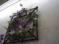 f:id:fujiwarakominka:20111127145608j:image:medium
