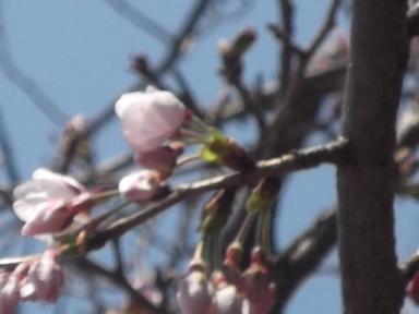 f:id:fujiwarakominka:20120328125611j:image