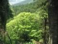 f:id:fujiwarakominka:20120505125338j:image:medium